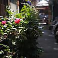 ④路地裏の赤い花